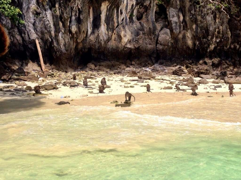The monkeys at Monkey Beach