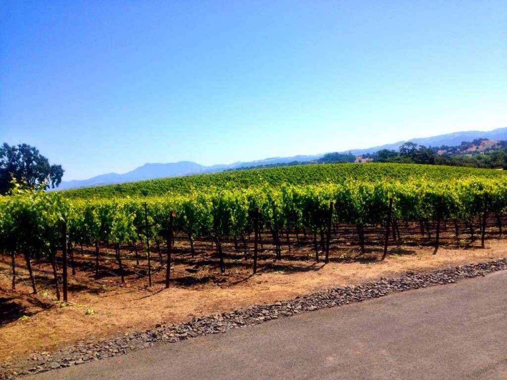 Vineyards as far as the eyes can see